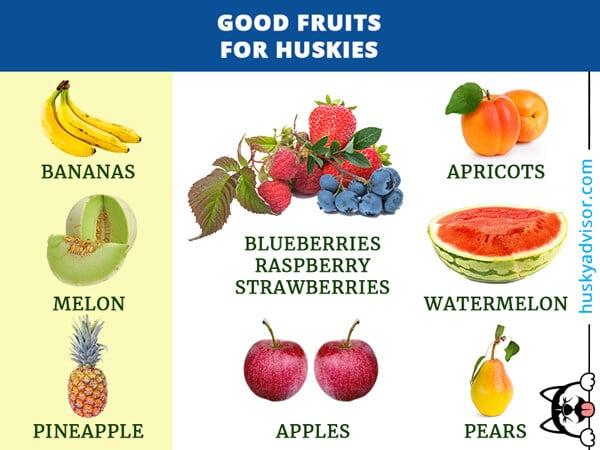 fruits-good-for-dogs-siberian-huskies