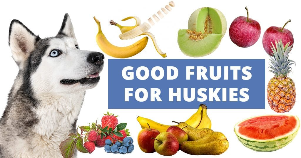 good-fruits-for-dogs-siberian-huskies