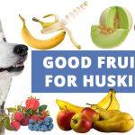 good-fruits-for-dogs-siberian-huskies