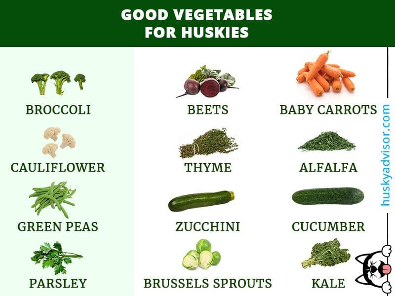 Good vegetables for huskies siberian dogs