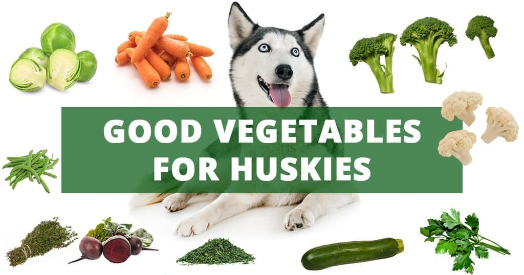 good-vegetables-for-your-husky-siberian-dogs-balanced-diet