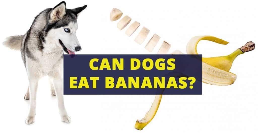 can-dogs-eat-bananas-fruits-treats