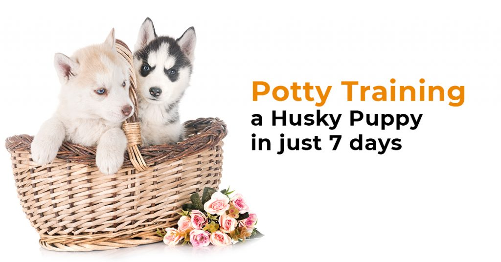 potty training husky