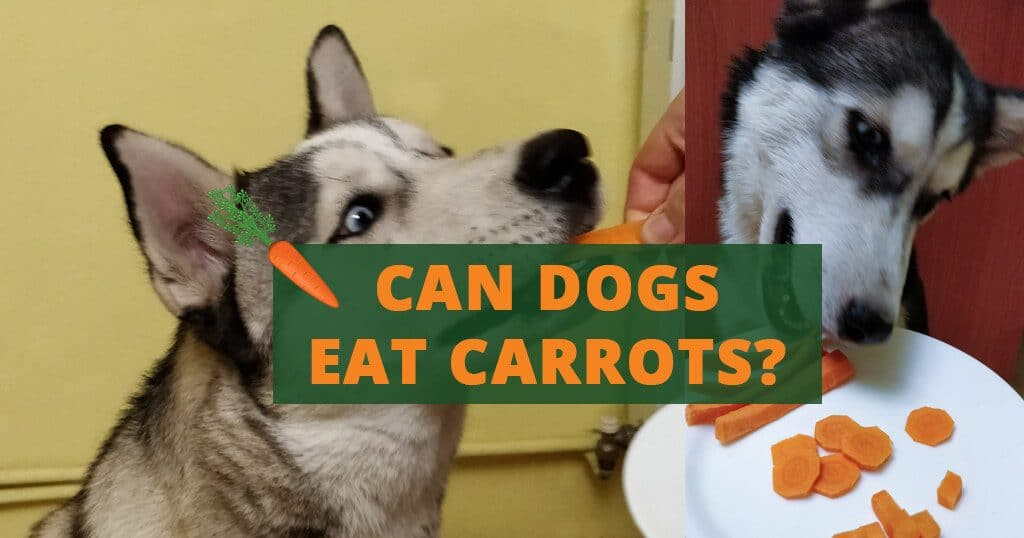 can dogs eat carrots treats
