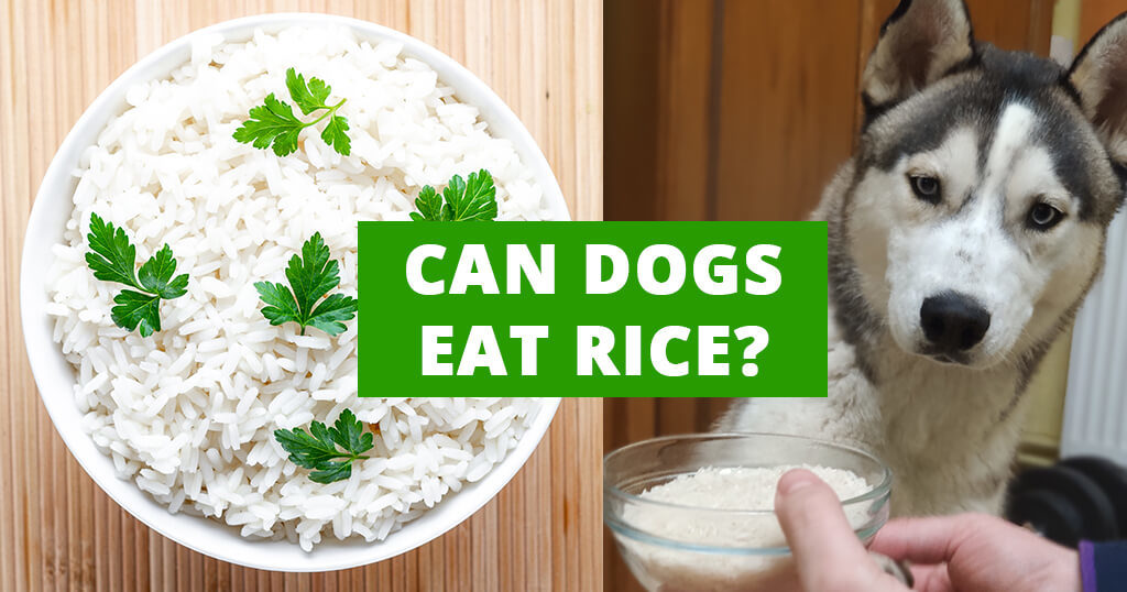 can-dogs-eat-cooked-boiled-rice
