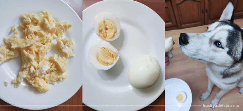 Siberian huskies can eat eggs