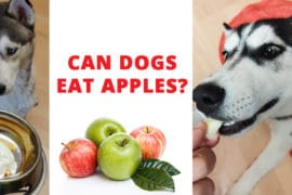 can-dogs-eat-apples