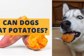 dogs can eat potatoes