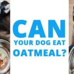 can-your-dog-eat-oatmeal