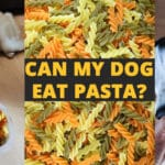 can my dog eat pasta