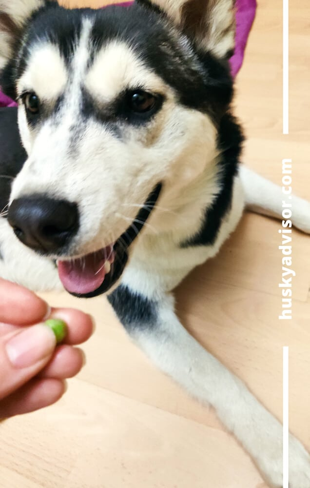 peas for dogs