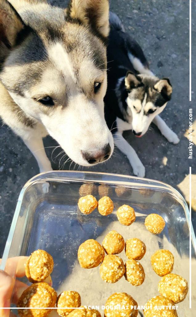 No-bake homemade peanut butter and oats dog treats