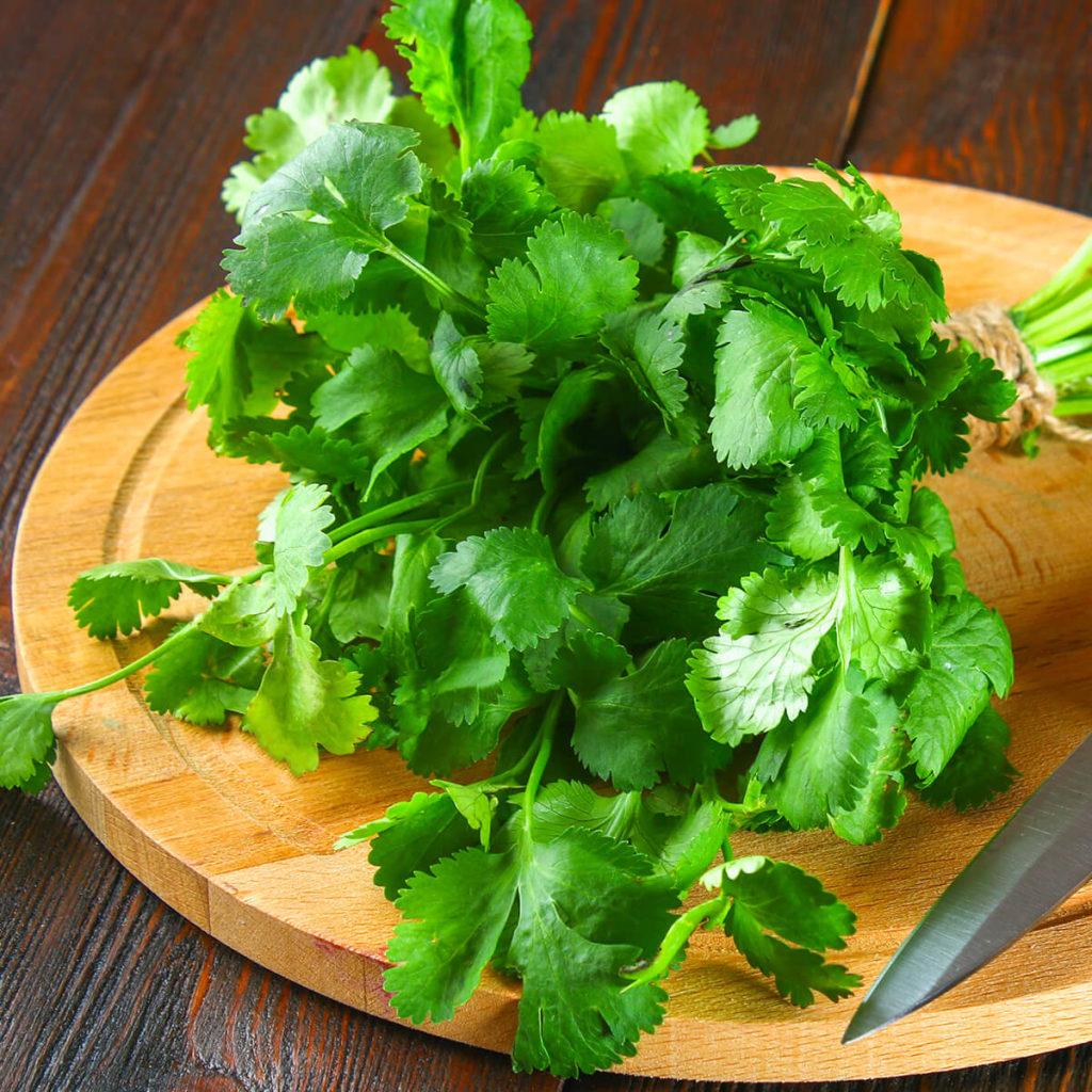 can my husky eat cilantro