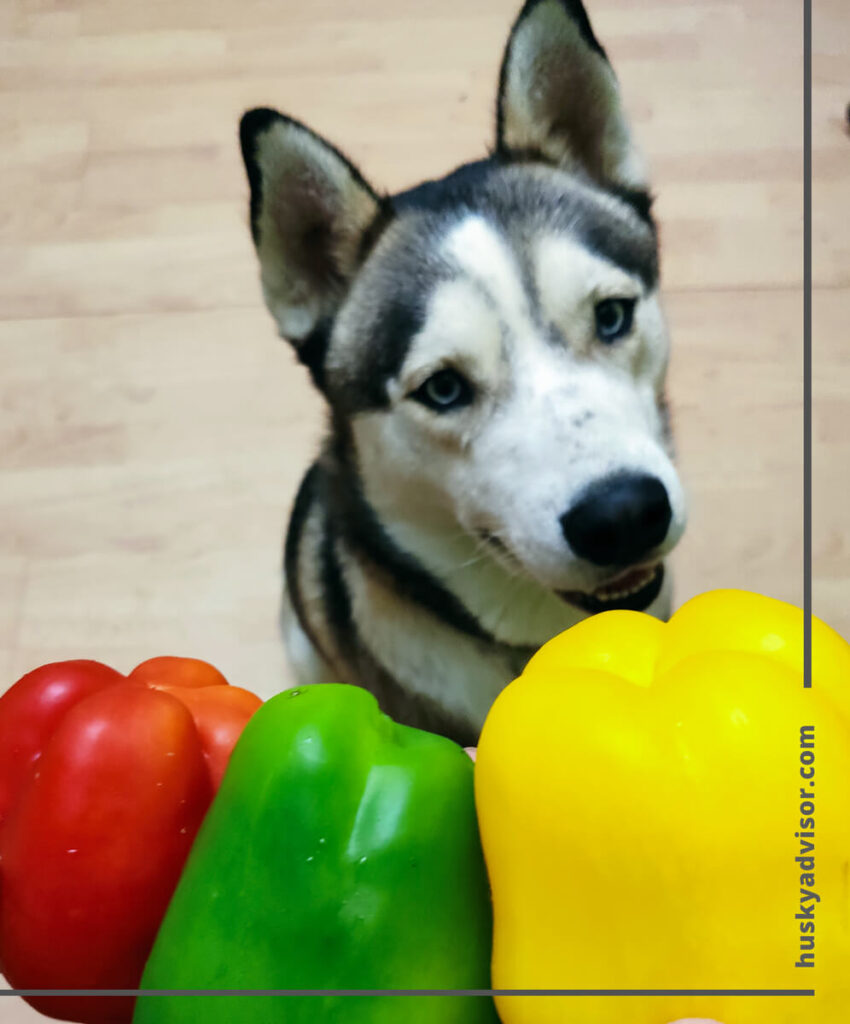 can my husky eat bell peppers