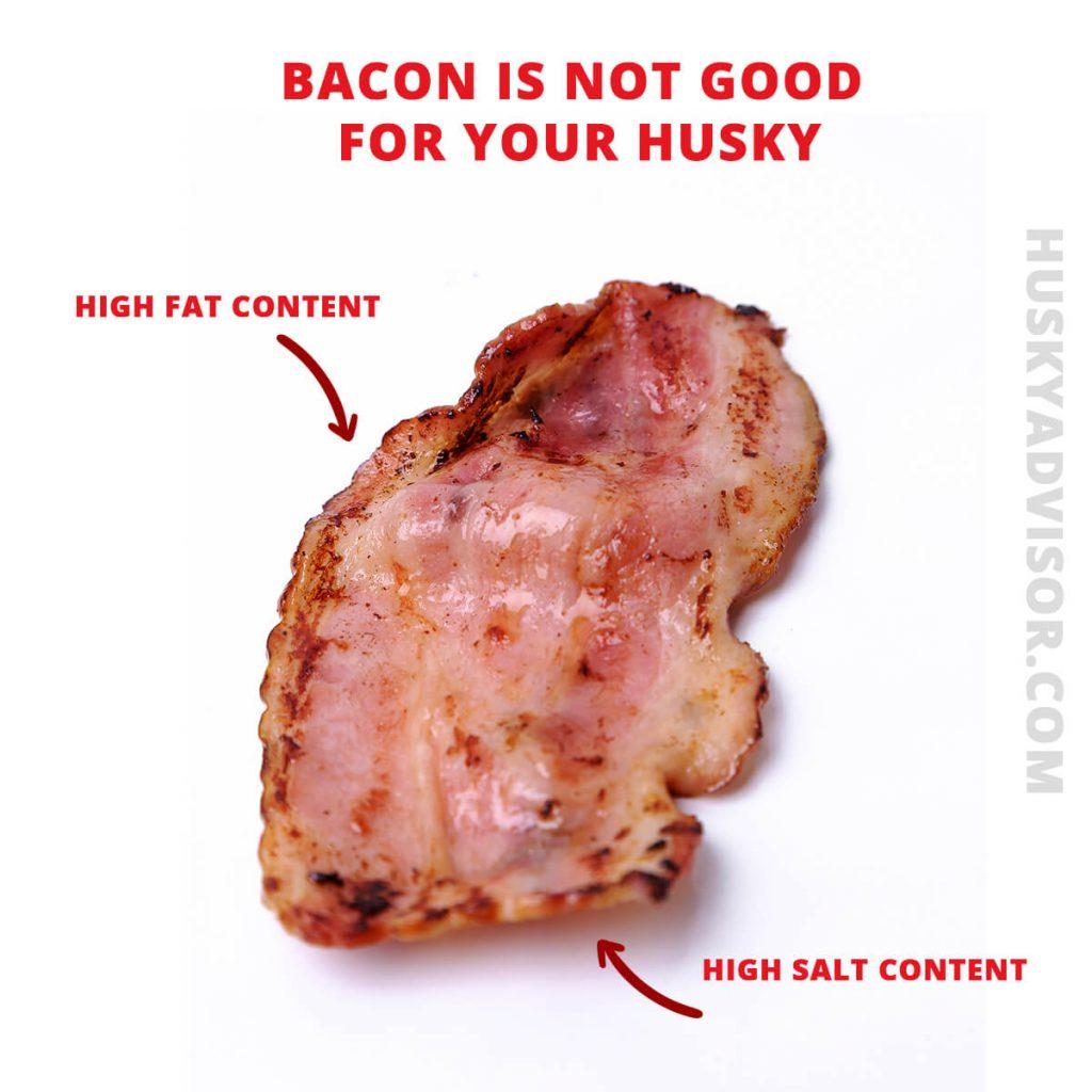 Can my husky eat bacon