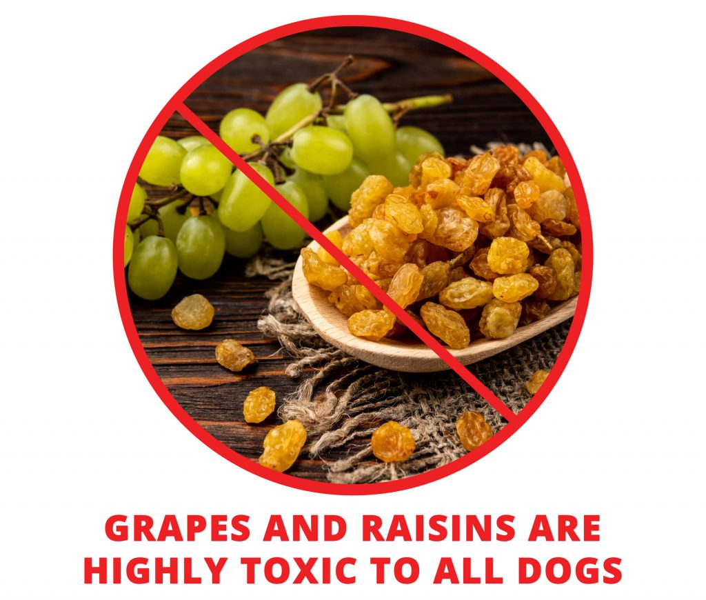 grapes and raisins are toxic for your husky